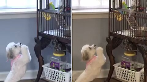 Polite pup literally begs parrots to play with her