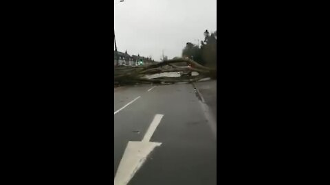 Strong winds cause a massive tree to fall and block road