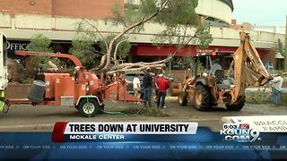mckale center tree down - Video
