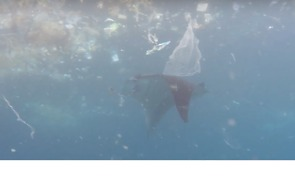 Manta Ray Swims Through Trash in Search of Food - Video