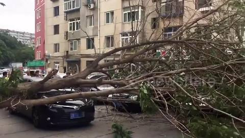 Driver cheats death after tree falls onto moving car