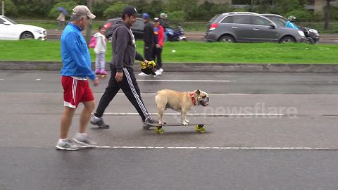 Dog takes to the road on a skateboard in Bogota, Colombia