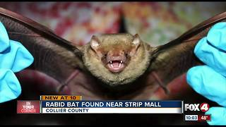 Rabies Alert! Bat in Naples test positive for rabies - Video