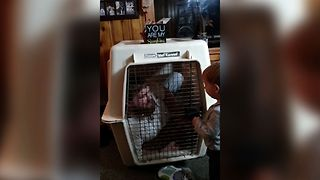 Baby Locks Dad In Doggy Kennel - Video