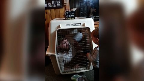 Baby Locks Dad In Doggy Kennel