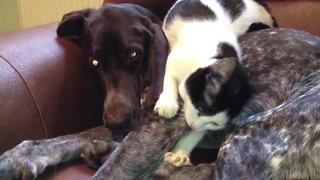 Cat decides to take nap on top of dog