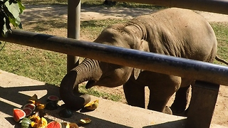 Watch This Precious Baby Elephant Enjoying His Favorite Snack. - Video