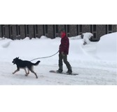 Dog Pulls Snowboarder Through Snowbound Erie, Pennsylvania - Video