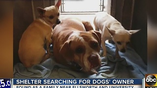 Four-legged friends trying to find furr-ever home, together
