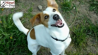 Friendly Dog Is So Happy To Be Rescued. Adorable Dog Nina Rescued by Howl Of A Dog - Video