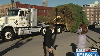 Durham Christmas Tree arrives - Video