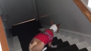 Dog forgets how to use stairs, walks up backwards - Video