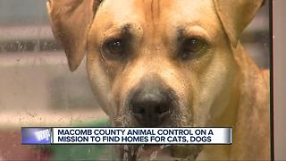 Macomb County Animal Control on mission to find homes for cats, dogs - Video