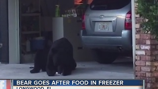 Bear with sweet tooth raids freezer - Video