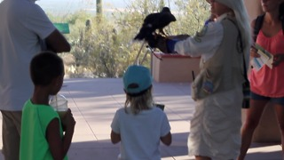Visit Cool Summer Nights at the Desert Museum - Video