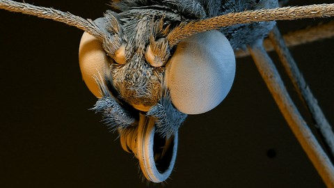 Amazing HD Footage of Plants and Insects Magnified Thousands of Times