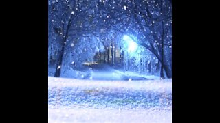 Winter, Snowfall, Relaxing snow background