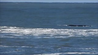 Whales Surface Off Brazilian Coast After Storm Passes Through - Video