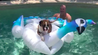 Dog humorously plays with enormous inflatable pool float