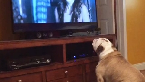 This Bulldog Warns Movie Character About Impending Doom