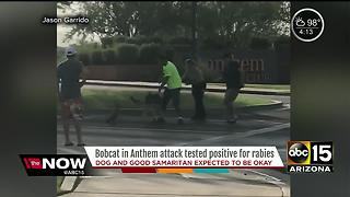 Bobcat that attacked man, dog had rabies - Video