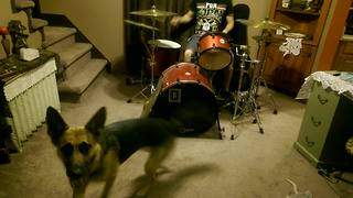 German Shepherd rocks out to drum solo