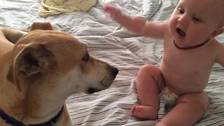 Baby thrilled to receive kisses from doggy friend - Video