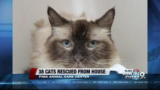 PACC rescues 38 cats from hoarder - Video