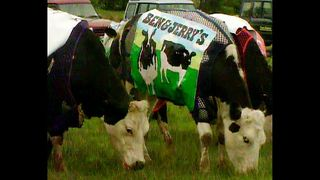 Cow Advertising - Video