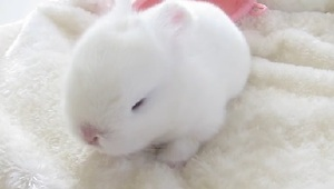 These Baby Bunnies Will Brighten Up Your Day - Video
