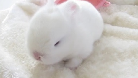 These Baby Bunnies Will Brighten Up Your Day