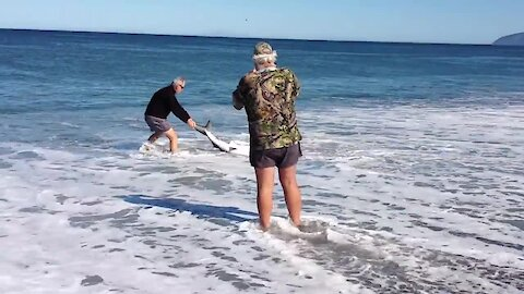 Guy Rescues Blue Shark Stranded On The Beach