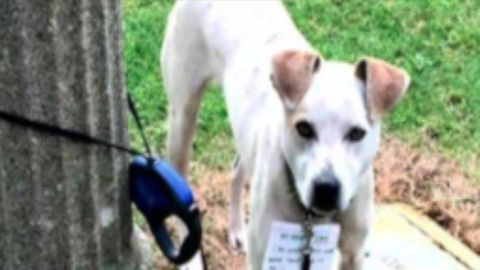 Good Samaritan Walks 3 Miles to Save Dog Tied To Pole
