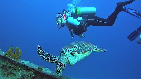 Friendly sea turtle swims straight to scuba divers for a face to face look