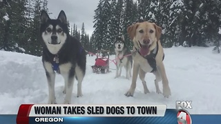 Woman uses dogsled to get to grocery - Video