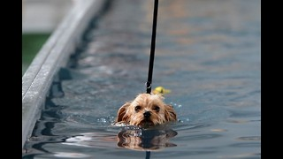 Germany's First Indoor Swimming Pool for Dogs