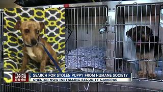 Puppy stolen from Humane Society of Tampa Bay - Video