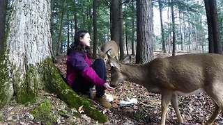 Hand-feeding friendly wild deer