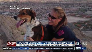 Lake Las Vegas woman desperate to find missing therapy dog - Video