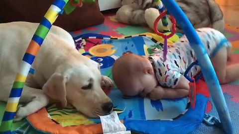 Baby can't stop laughing at family dog