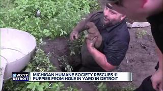 Humane Society rescues puppies in hole - Video