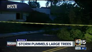 Storm pummels large trees in Peoria - Video