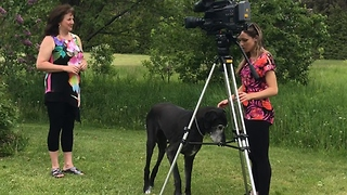 Blind old Great Dane photobombs news interview - Video