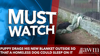 Rescued Puppy Drags Blanket Outside So That A Homeless Dog Could Sleep On It