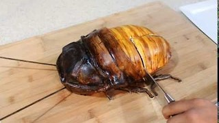 Talented Baker Makes Tasty Looking Cockroach Cake - Video