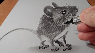 How to draw a 3D mouse - Video