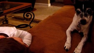 Adorable 4-year-old sings dog to sleep - Video