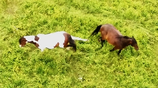 Drone captures grumpy horse starting a fight - Video