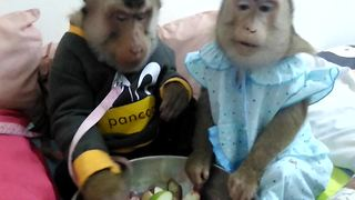 Monkey couple enjoys a snack before bedtime