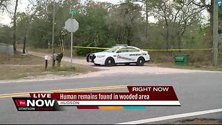 Human remains found in wooded area in Pasco County - Video